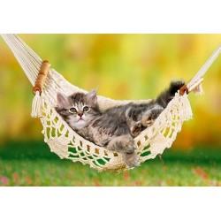 Kočička v síti